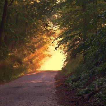 Life Path 7